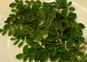 moringa-leaves11